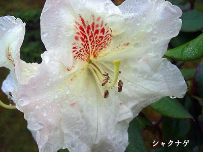 2008_04_25_001