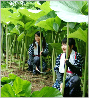 Akitafuki01