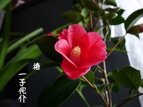 2010_12_28_003z